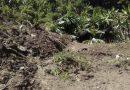 Deslizamiento de ladera sepulta a 2 ancianos en la Sierra Mazateca