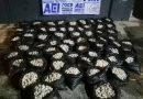 Decomisa FGEO otro cargamento con 30 mil huevos de tortuga
