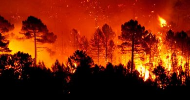 Estado de emergencia en 13 municipios de Oaxaca por incendios forestales