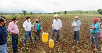 Ponen en marcha campaña fitosanitaria para la producción de maíz