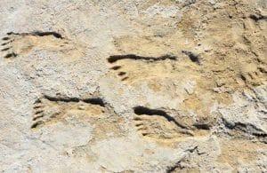 Descubren huellas en Nuevo México, indican presencia humana en América hace 23 mil años