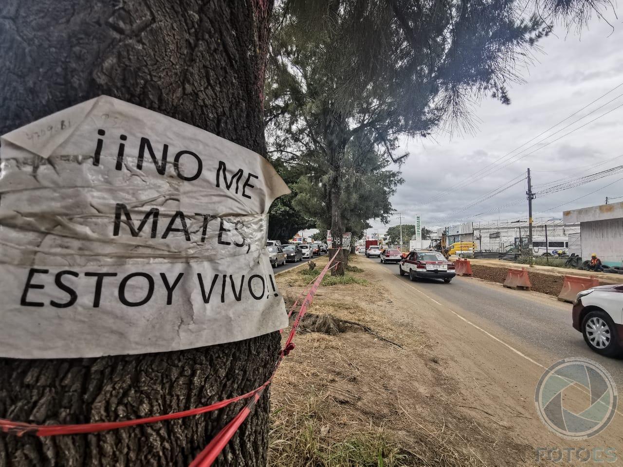 Ampliación de Av. Símbolos Patrios costará la vida de 1,500 árboles